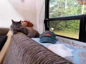 Hat_W_Penny-Cat_Fred-Moose_9-8-14